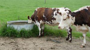 Une eau de qualité est indispensable à la bonne santé des animaux