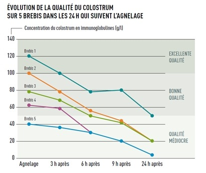 evolution qualite colostrum brebis 24h